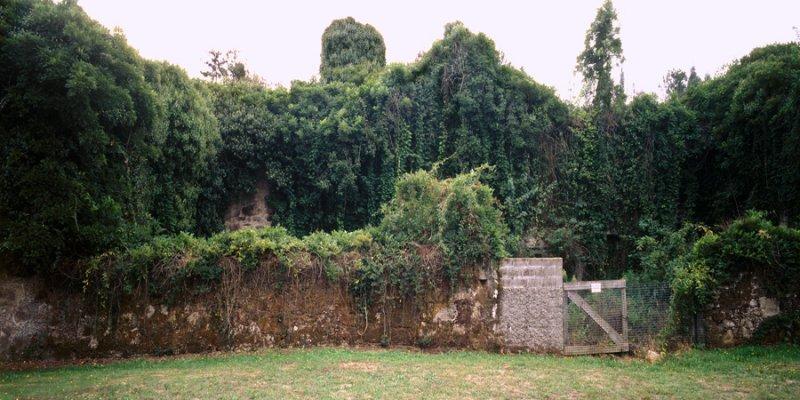 Sin  título.  Invernadero  xiii,  2002